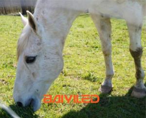 wit paard bij Manege met logo